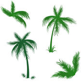 Tropical palms set — Stock Vector