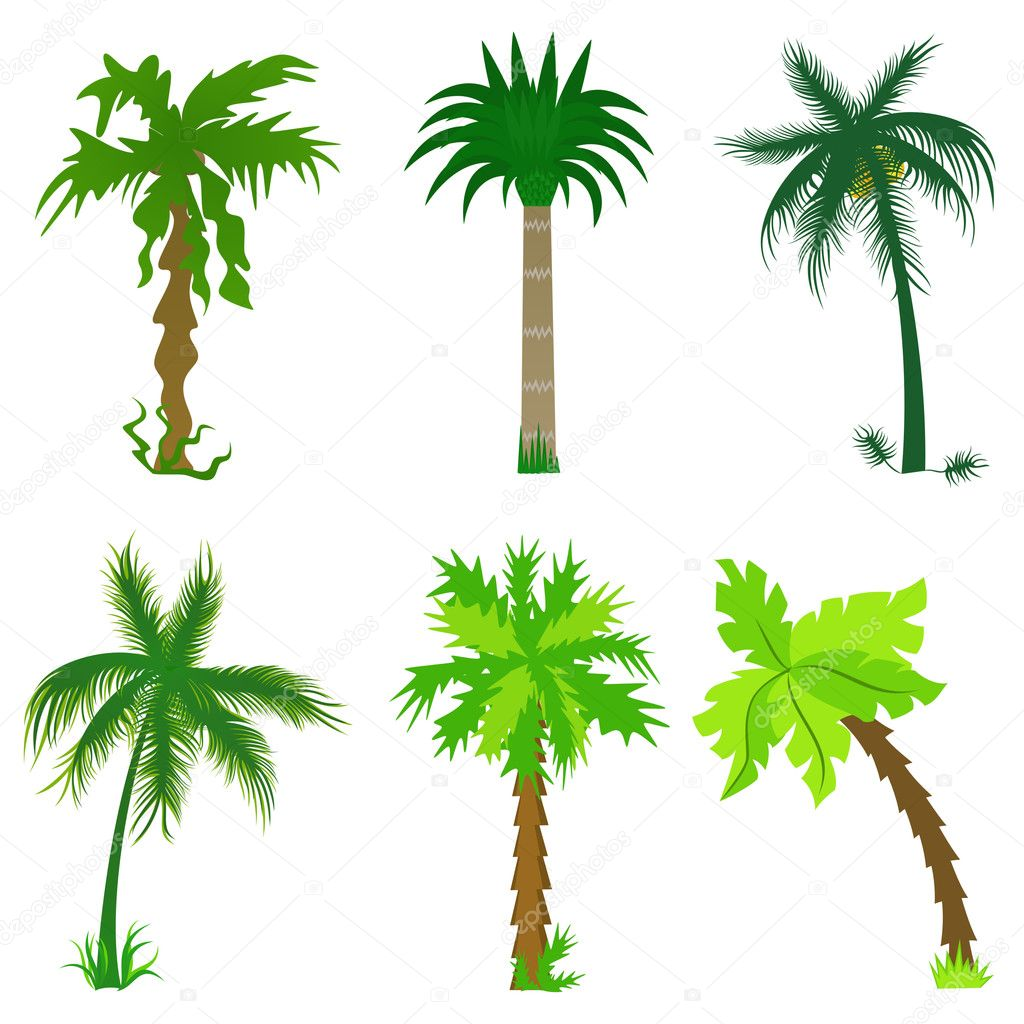 Set of various palm trees. Objects isolated. Vector tropical collection for Your design — Stock Vector #3124239