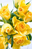 Bunch of yellow roses — Stock Photo