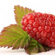 Ripe Tayberry — Stock Photo #3387476