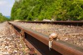 A snails — Stock Photo