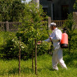 Stock Photo: Spraying trees