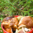 Royalty-Free Stock Photo: Mushrooms