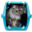 Cat in cage carrier — Stock Photo