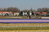 Dutch Floral industry, flowers on field — Stock Photo