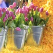 Tulips in metal buckets - Stockfoto