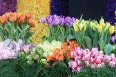 Tulips in all colors — Stock Photo