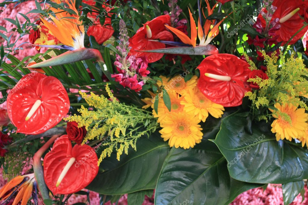 Bird of paradise and red anthurium in an exotic floral arrangement — Stock Photo #2999282