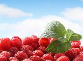 Fresh raspberry against sky — Stock Photo