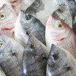 Fresh fish on ice — Stock Photo