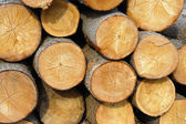 Logs sunlit — Stock Photo