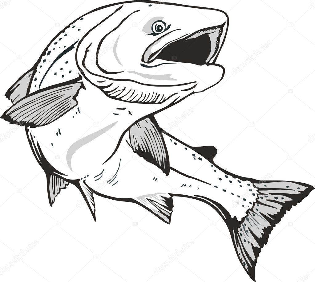Fish  salmon .Trout  vector illustrtion — Stock Vector #3428674