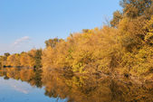 Colorful autumn river — Foto Stock