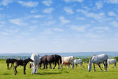 Horses drove on pasture — Stock Photo