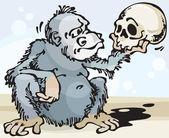 Monkey and Skull — Stock Photo