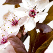 Spring blossom — Stock Photo #3005501