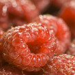 Red Raspberries Macro - Stock Photo
