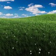 Green grass and cloudy sky — Foto Stock