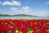 Beautiful panorama to Lake Balaton with red flowers — Stock Photo