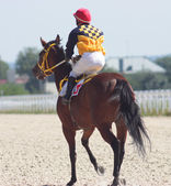 The jockey and arabian stallion. — Stock Photo