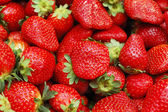 Close up of strawberry — ストック写真