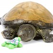Turtle considers handmade ceramic turtle — Stock Photo