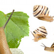 Stock Photo: Striped snail on white background