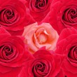 Red roses texture — Stock Photo #2732494