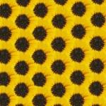 textura de manzanilla — Foto de Stock