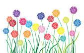 Aster multicolor garden — Stock Vector