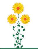 Aster bouquet — Stock Vector