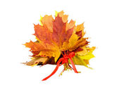 Bouquet of autumn leaves tied with red ribbon — Stock Photo