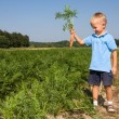 Royalty-Free Stock Photo: Boy harvesting carrots on field