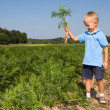 Boy harvesting carrots on field — Stock Photo
