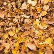 Stock Photo: Dry leaves background
