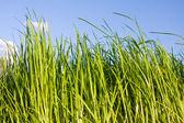 Grama verde e céu azul — Fotografia Stock