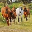 Stock Photo: Mares with foals