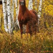 Stock Photo: Chestnut stallion portrait in autumn