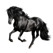 Black horse on white background — Stock Photo