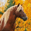 Chesnut horse in autumn — Stock Photo