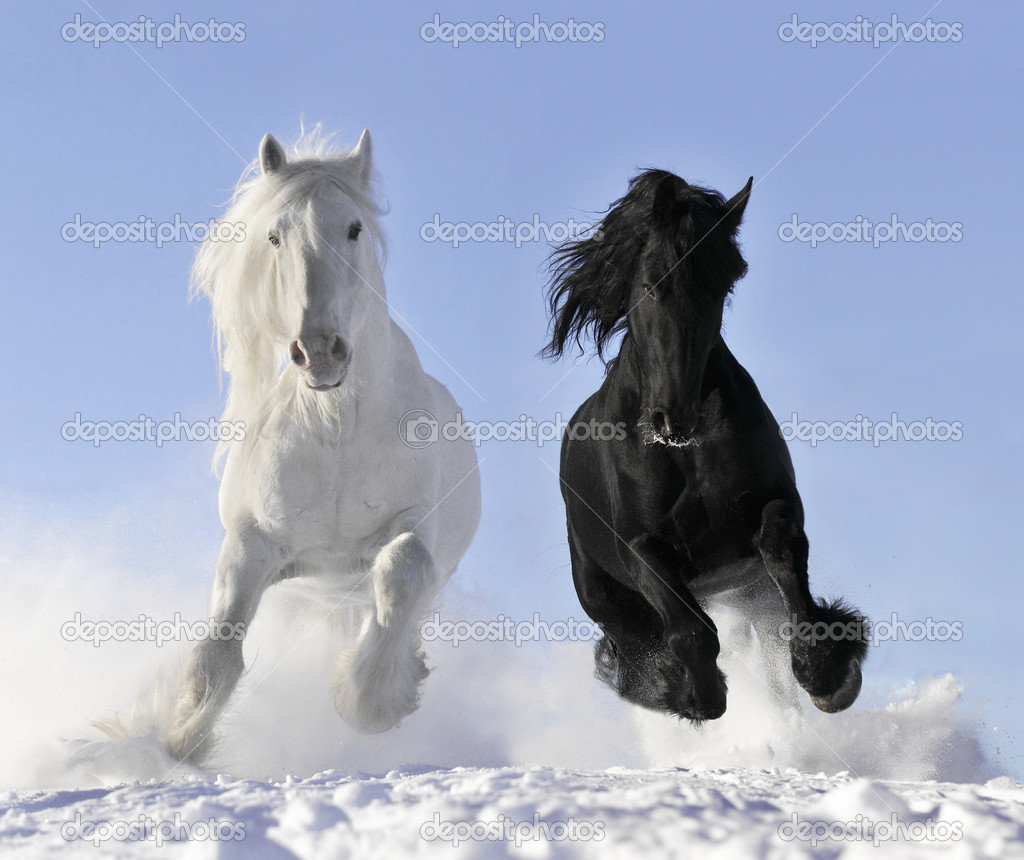 White and black horse in winter — Stock Photo #3252550
