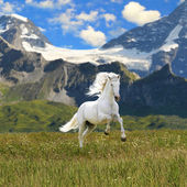 White horse run gallop in valley — Stock Photo