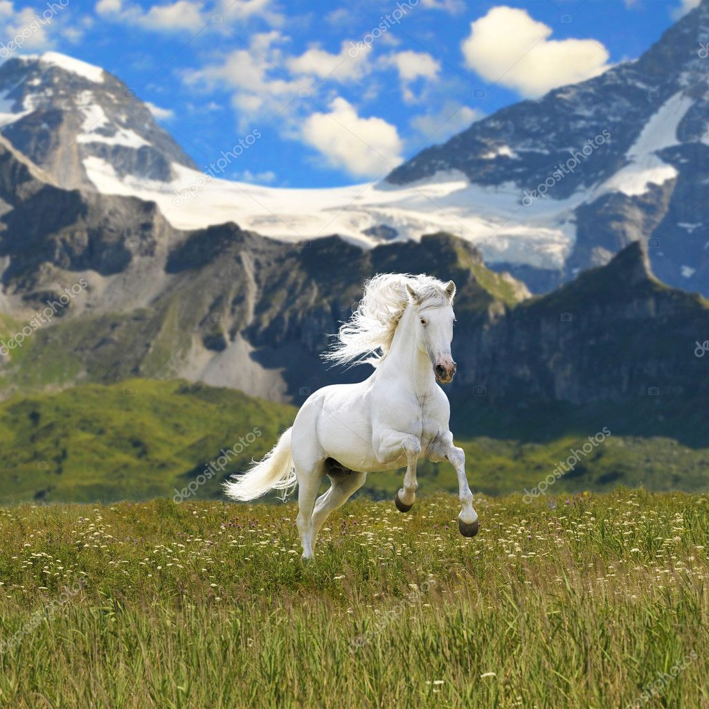 white horse run gallop in valley stock photo vikarus. Black Bedroom Furniture Sets. Home Design Ideas