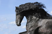 Portrait of moving friesian black horse stallion — Stock Photo