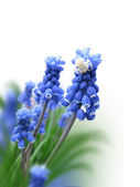 Blue flower with a spider — Stock Photo