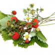 Wood wild strawberry, fragaria vesca — Stock Photo