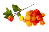Cloudberries — Stock Photo