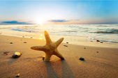 Starfish on the beach — Foto Stock