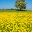 Spring on meadow — Stock Photo