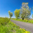 Spring scenery — Stock Photo
